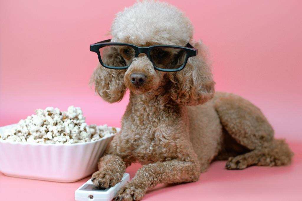 Filme motivationale care-ți vor da un avânt în carieră